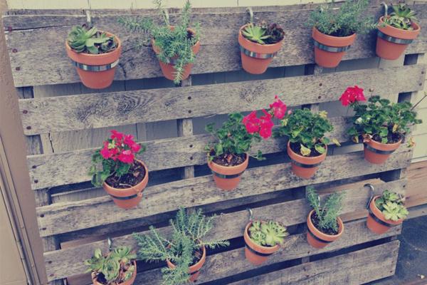 Jardim ou horta